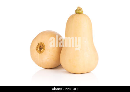 Group of two whole smooth pear shaped orange butternut squash waltham variety isolated on white background - Stock Photo