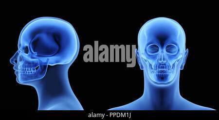 The Human Body - Skull. X-Ray Effect. 3D illustration - Stock Photo