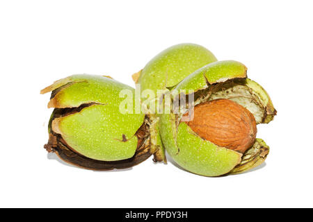 Ripe nuts of a Walnut tree, still in their husks, isolated on a white background - Stock Photo
