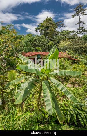Rainforest, Corcovado National Park, Osa Peninsula, Costa Rica - Stock Photo