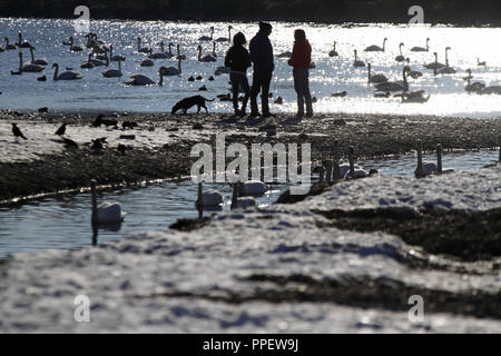 The winter of 2013 is coming to its end: spring-like afternoon mood on the Isar in Thalkirchen. - Stock Photo