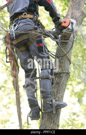 Man sawing a tree using a chainsaw. The man is wearing safety equipment clothes. Close up - Stock Photo