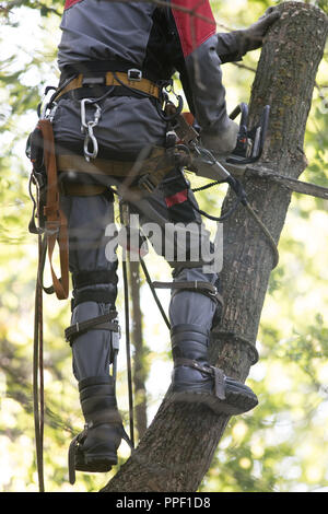 Man sawing a tree using a chainsaw. The man is wearing safety equipment clothes. Close up, view from the back - Stock Photo