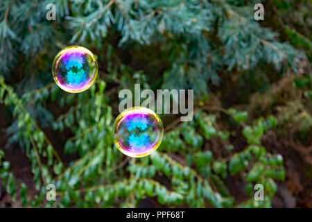 Two colorful  soap bubbles at the green background of bushes in a garden - Stock Photo