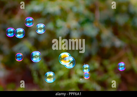 Group of colorful, mostly blue soap bubbles at the green background in a garden - Stock Photo