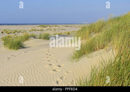 Footsteps in the fine sand of a dune on the East Frisian Island Juist with the vast view above the beach to the North Sea on the horizon, 27 June 2018 | usage worldwide - Stock Photo