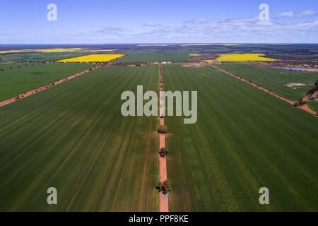 Aerial view of Wheat Crop, Midwest, Western Australia | usage worldwide - Stock Photo