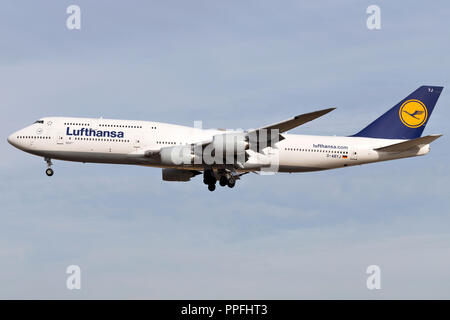German Lufthansa Boeing 747-8 (old livery) with registration D-ABYJ on short final for runway 25L of Frankfurt Airport. - Stock Photo