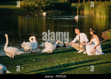 beautiful young wedding couple feeding swans near lake - Stock Photo