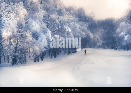 Lonely silhouette walking on snowy road in winter season in forest park snowy trees in soft blue purple colors - Stock Photo