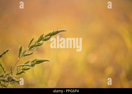 Awesome macro vision of single stem of grass - Stock Photo