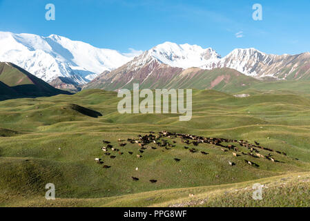 View over Peak lenin valley with flock of sheeps, Kyrgyzstan - Stock Photo