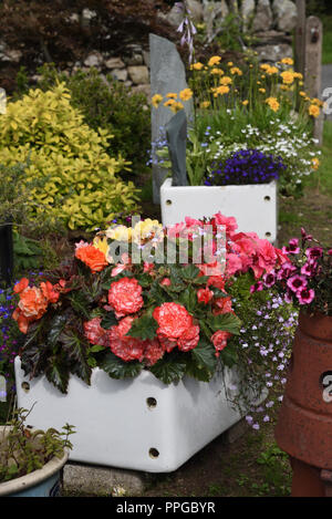 Mixed flowers planted in Belfast sinks - Stock Photo