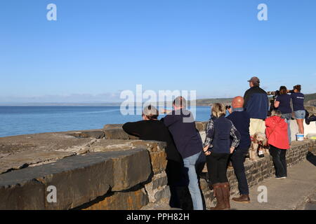 Dolphin watching from New Quay Harbour, Cardigan Bay, Ceredigion, Wales, Great Britain, United Kingdom, UK, Europe - Stock Photo