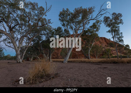 Gum trees in a river bank,  West Macdonnell Ranges, Alice Springs, NT, Australia - Stock Photo