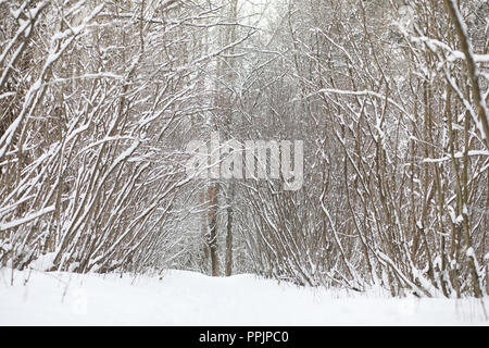 Winter landscape snow covered expanses. A park in the winter in  - Stock Photo