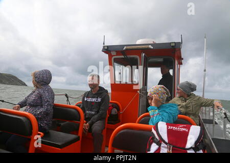 Dolphin watching, Wildlife Boat Trip, New Quay, Cardigan Bay, Ceredigion, Wales, Great Britain, United Kingdom, UK, Europe - Stock Photo