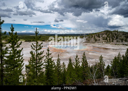 Grand Prismatic Spring in Yellowstone National Park, as seen from the Fairy Falls trail overlook, showing the hot spring's rainbow of colors. Trees fr - Stock Photo