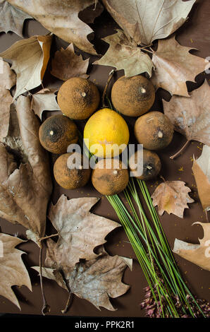 Dry lemons in the shape of a flower, on a isolated brown background and decorated with dry autumn leaves. ideal for decorations with fall theme. - Stock Photo