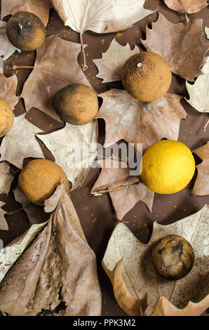 Autumn leaves decorated with dried lemons, on a background of brown color, incredible background for decorations with fall season theme. - Stock Photo