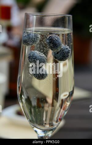 A close up of a glass of champagne with blueberries floating in it in an outdoor garden - Stock Photo