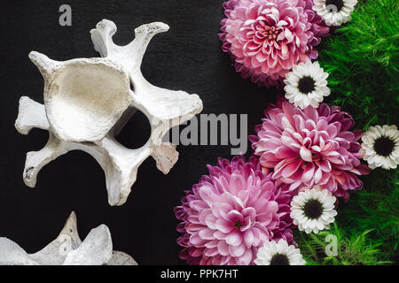 Animal Vertebrae with Pink and White Mums on Black Table - Stock Photo