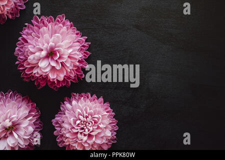 Offset Pink Mums on Black Table with Space for Copy - Stock Photo