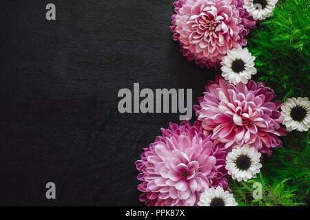 Pink and White Mums with Green Foliage and Space for Copy on Black Table - Stock Photo