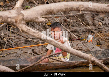 Pacaya Samiria Reserve, Peru, South America.  Young boy showing a Red Piranha fish that he had just speared while fishing in his dugout canoe in the U - Stock Photo