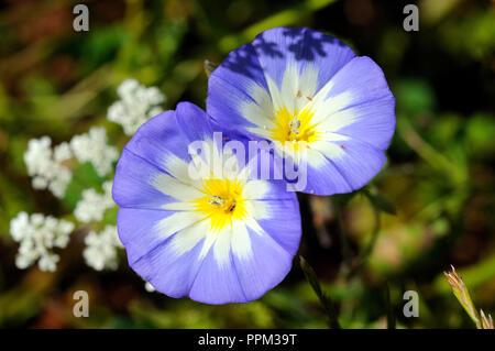 Spring in Algarve. Portugal - Stock Photo