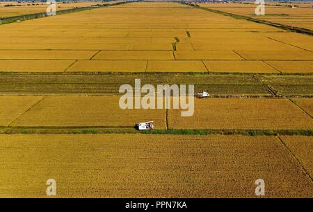 (180927) -- SHIJIAZHUANG, Sept. 27, 2018 (Xinhua) -- Aerial photo taken on Sept. 26, 2018 shows farmers driving agricultural machinery to harvest rice in the field in Wangtan Township of Tangshan, north China's Hebei Province.(Xinhua/Yang Shiyao) (ry) - Stock Photo
