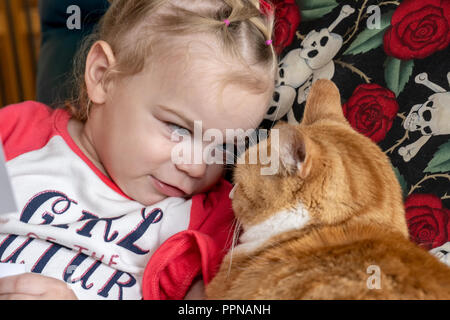 22 month old Lily having a staring contest with her purebred Exotic Shorthair domestic cat 'Smush'. - Stock Photo