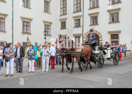 VIENNA, AUSTRIA - JUNE 27, 2015: Coach walking horse. Beautiful view of horse-drawn carriage in the downtowan Vienna, Austria - Stock Photo