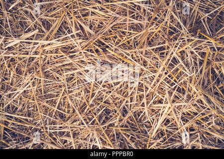 Hay seamless background. Yellow dry autumn grass on the ground. The texture of hay - Stock Photo