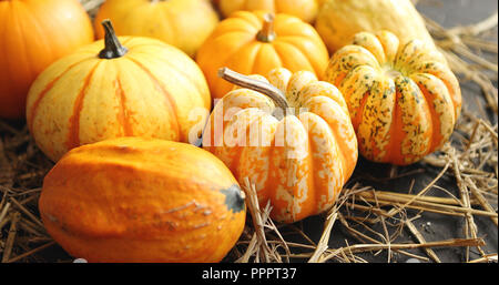 Mellow pumpkins laid on hay - Stock Photo