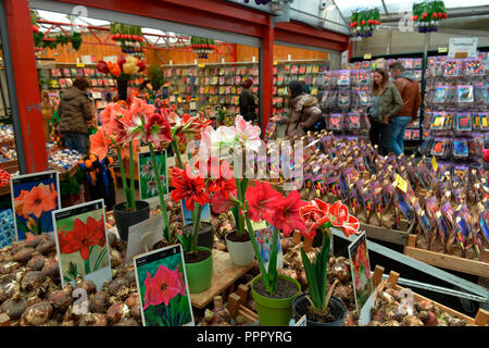 Bloemenmarkt, Singel, Amsterdam, Niederlande - Stock Photo