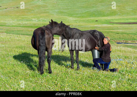 Kyrgyz woman milking a mare on mountain pastures, Song Kol Lake, Naryn province, Kyrgyzstan, Central Asia - Stock Photo