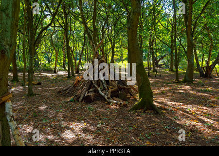 In a clearing in Sherwood Forest is a den or hideout made of old fallen branches from Silver Birch and Oak trees. - Stock Photo