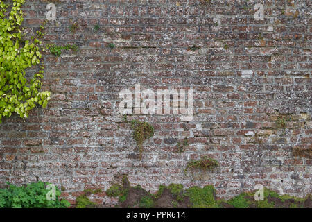 Brick wall background featuring a centuries old grey color brick and stone wall with vegetation growing upon its surface - Green walls and buildings - Stock Photo