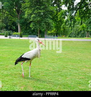 Stork on the meadow in a summer park - Stock Photo