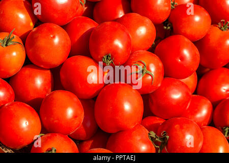 lots of red tomatoes beautiful background view from the top.