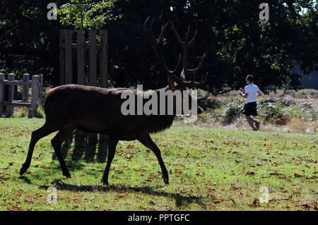 London, UK. 27th Sep 2018. UK Weather:  Hot day in Richmond Park at the end of September. Credit: JOHNNY ARMSTEAD/Alamy Live News - Stock Photo