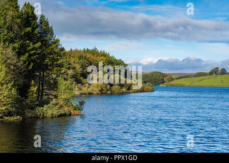 Scenic landscape view of Thruscross Reservoir with sunlit woodland at water's edge, under blue sky - Washburn Valley, North Yorkshire, England, UK. - Stock Photo