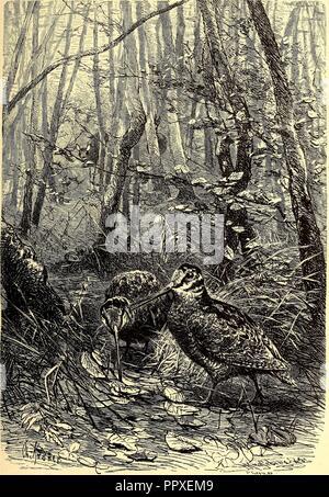 Brehms Tierleben - allgemeine Kunde des Tierreichs - mit 1800 Abbildungen im Text, 9 Karten und 180 Tafeln in Farbendruck und Holzschnitt (1892) - Stock Photo