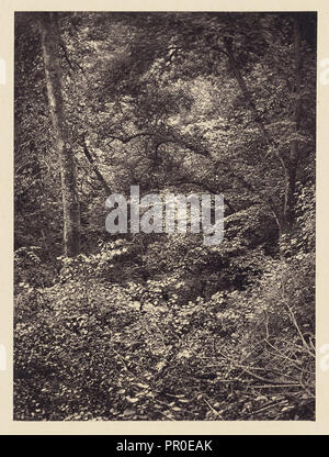 Forest; Arthur Brown, British, active 1850s, Newcastle upon Tyne, England; 1878; Carbon print; 9.6 x 7.1 cm, 3 3,4 x 2 13,16 in - Stock Photo