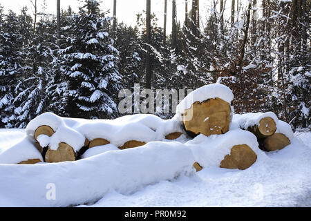 Cut down trees in winter in the snow, snow-covered tree trunks, Bavaria, Germany - Stock Photo