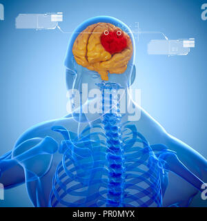 3d human skeleton and brain scan - Stock Photo
