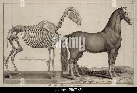 Histoire naturelle, quadrupèdes, Encyclopédie méthodique, ou par ordre de matières, Bénard, fl. 1806-1830, Engraving, 1782-1832 - Stock Photo