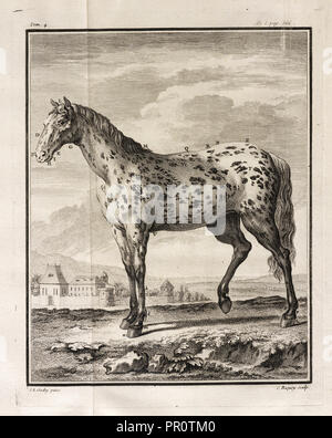 Histoire naturelle, générale et particulière: avec la description du cabinet de roi, Histoire naturelle, générale - Stock Photo