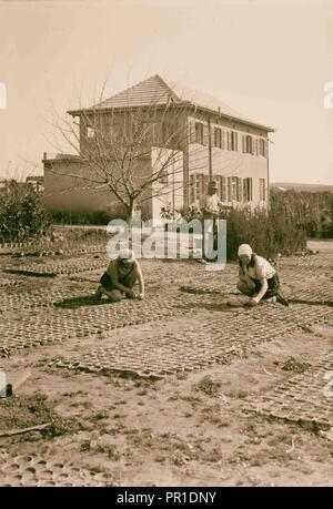 Zionist colonies on Sharon. Borochov. Girls' farm, potting plants. 1920, Israel - Stock Photo